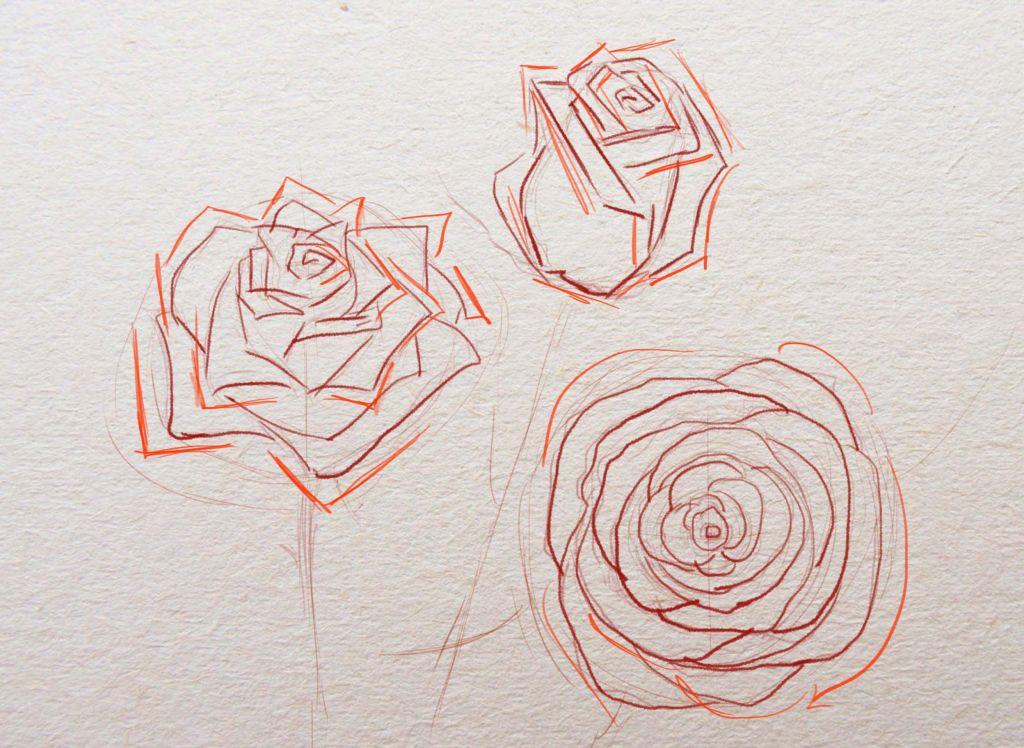 как рисовать розы, как нарисовать розу поэтапно, как рисовать розу карандашом