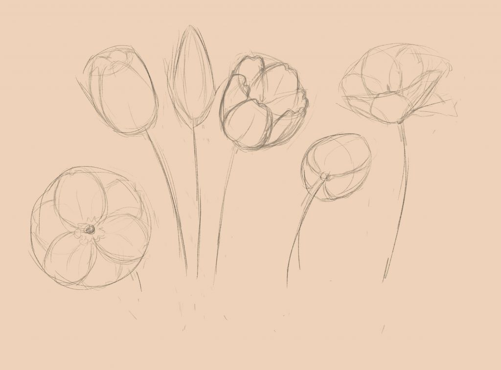 лепестки тюльпанов бывают различной формы
