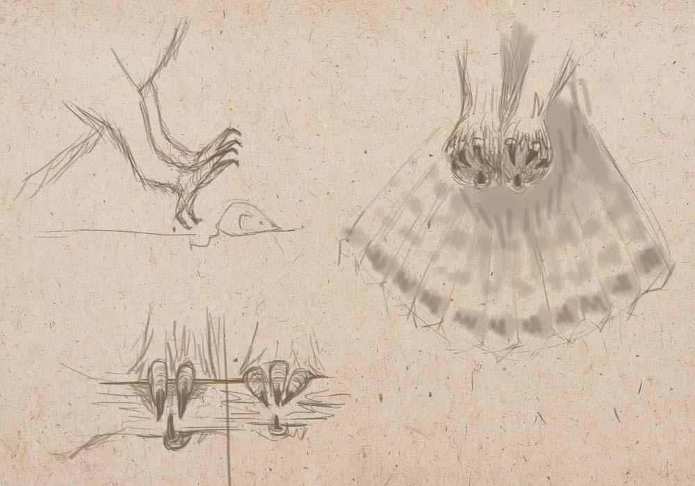 когти и лапы сов