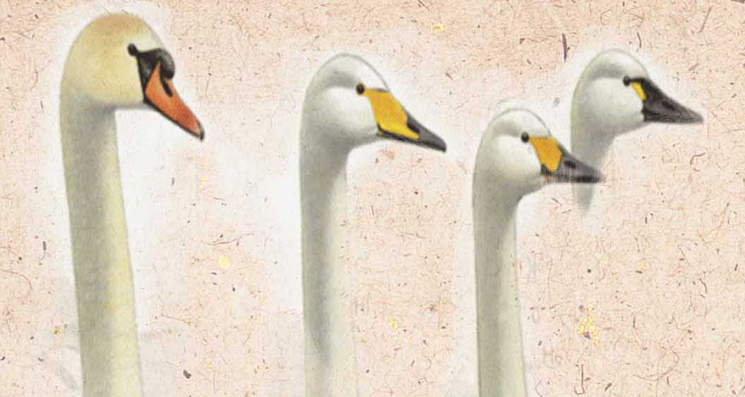 голова и шея лебедя